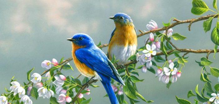 Danas počinje proljeće – SirokiBrijeg.info